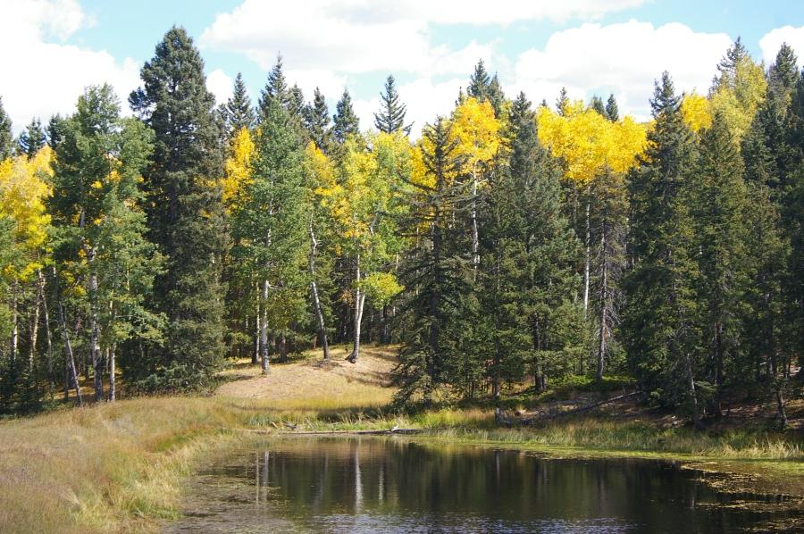 Cahill Pond