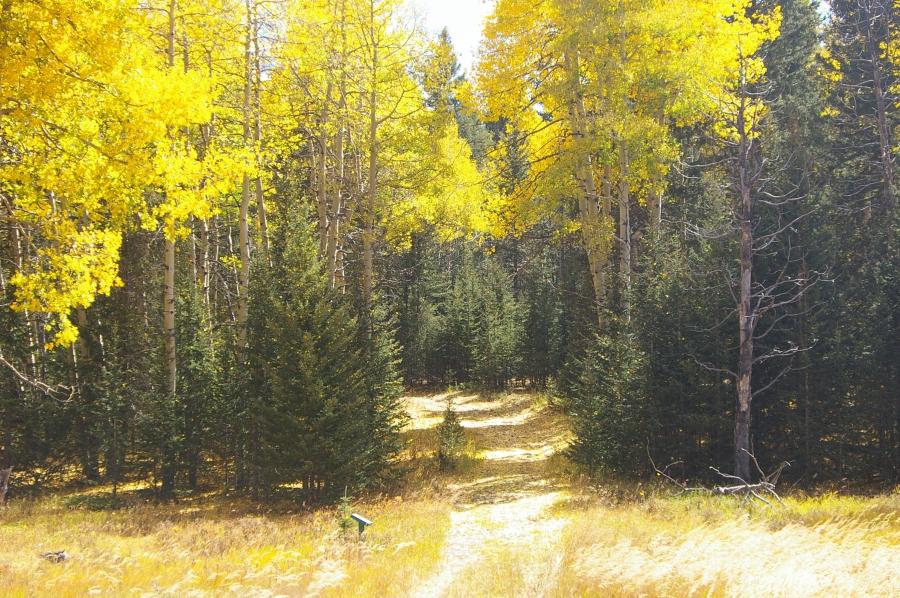 Trail in Mueller State Park