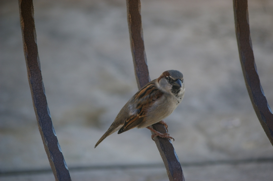 One of the Birds that Joined Us for Breakfast Everyday