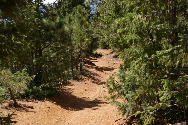 Hiking Trail in the Colorado High Country