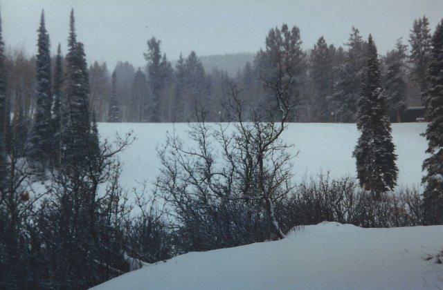 Snowing Outside of Aspen