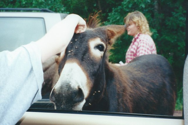Our Friendly Donkey