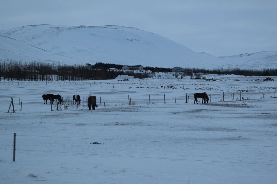 Some of the Many Horses