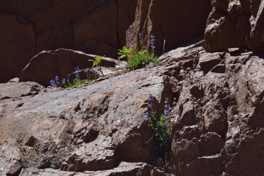 Wildflowers Growing on Boulders