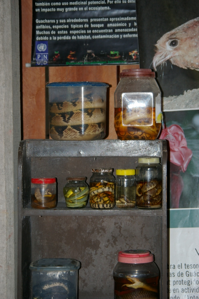 Poisonous Snake Display