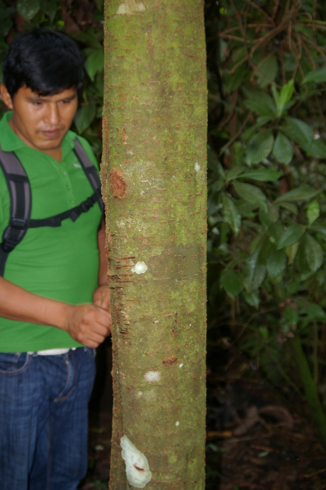 Guide Next to Tree with Fire Ants