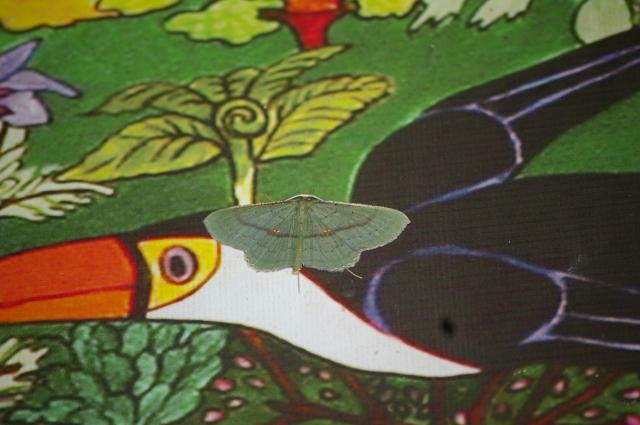 Moth at the Lodge