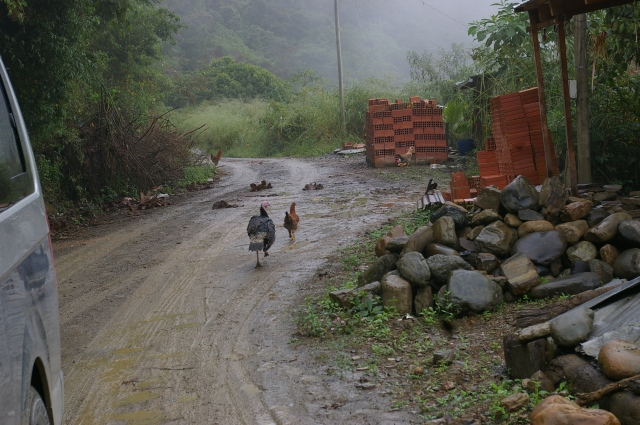 Turkey and Rooster on Death Road