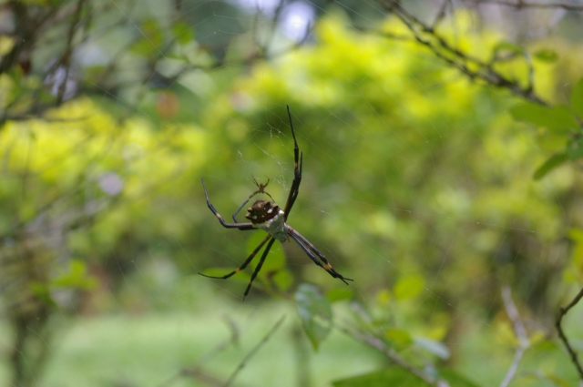 Spider with Baby