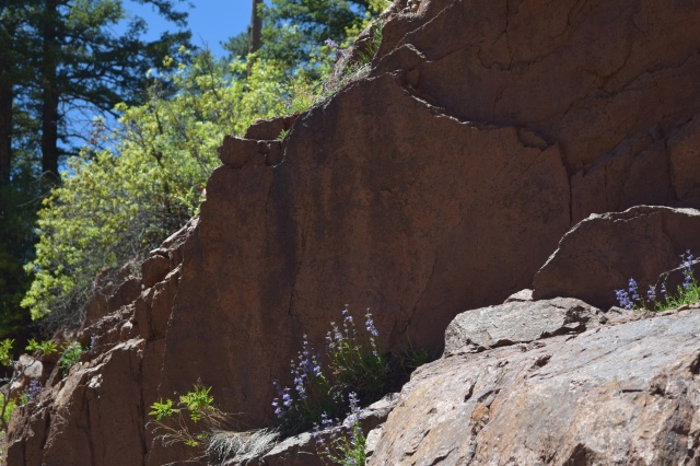 Flowers on Boulders